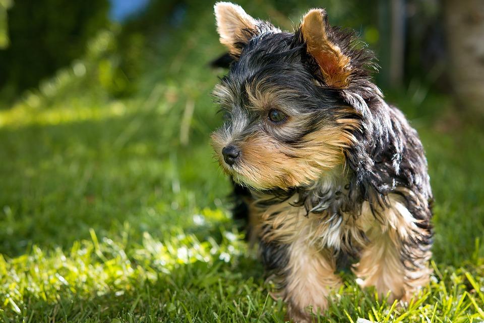 dog-1545090_960_720